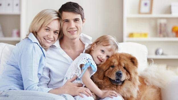 Wills & Trusts dog-young-family Direct Wills Feltham